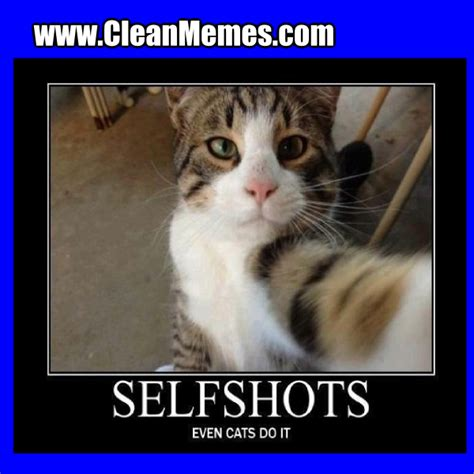 Funny Cat Memes Clean - funny clean cat pictures www pixshark com images galleries with a bite