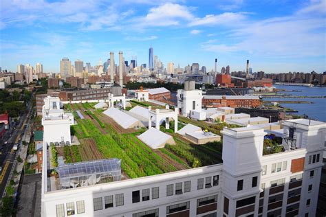 urban rooftops farms gardens housing   curbed