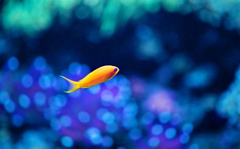 small sea sea orange small fish wallpapers and images wallpapers pictures photos