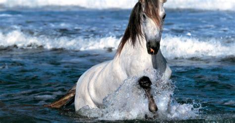 imagenes de caballos imagen caballo blanco trotando