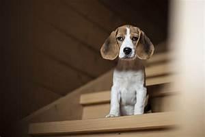 Was Darf Ein Schlüsseldienst Berechnen : darf ein junger hund treppen steigen ~ Themetempest.com Abrechnung