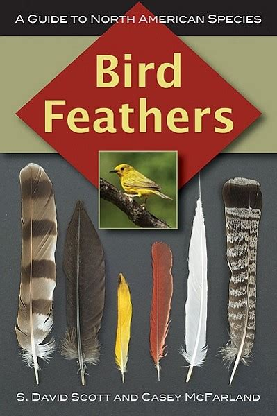 bird feathers bird feather identification guide north