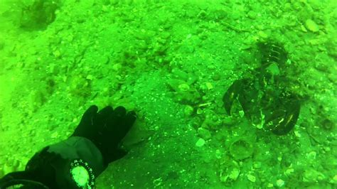 scallop diving  boston scuba october   youtube
