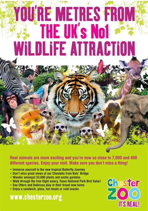 zoo chester poster wildlife a3 zoos elephants support elephant exhibition robson brown conservation