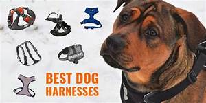 Best Dog Harnesses  U2013 Types  Reviews  U0026 Top Features