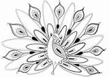Coloring Pages Peacock Cool Adults Popular sketch template