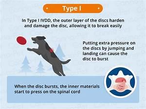intervertebral disc disease ivdd dogs