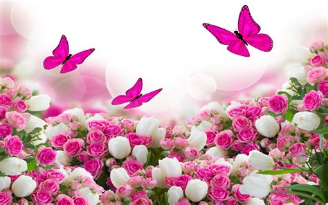flower bouquet white  pink roses  flying butterflies