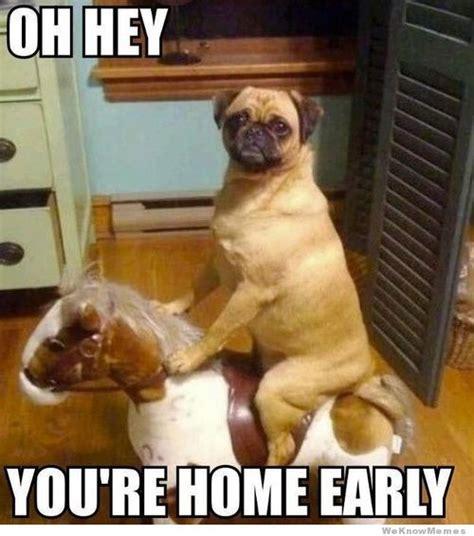 Funny Doge Memes - 25 funny dog memes