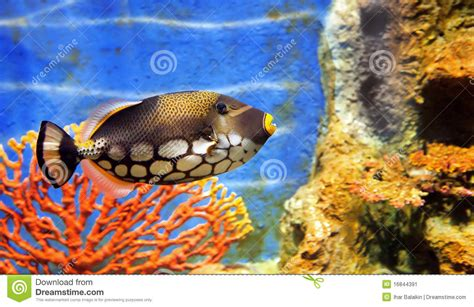 poisson aquarium eau de mer poissons d eau de mer tropicaux image stock image 16844391
