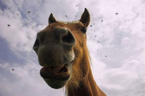 cute horse cute funny images