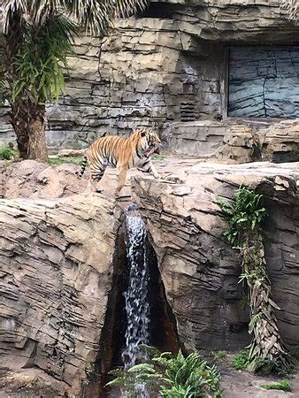 Busch Gardens Wait Times by Busch Gardens Ta 2019 All You Need To Before