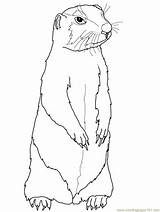 Gopher Coloring Prairie Dog Printable Coloringpages101 sketch template