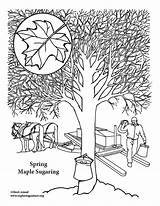 Maple Coloring Sugaring sketch template