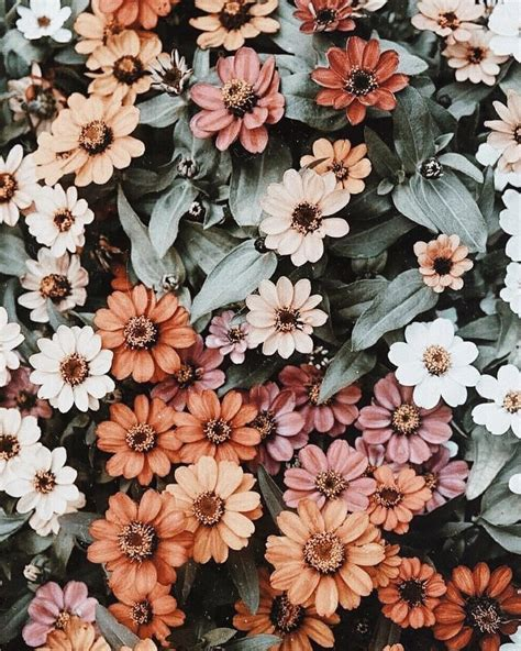 aesthetic floral hd wallpapers