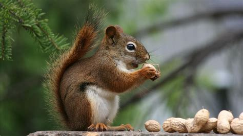 what kind of nuts do squirrels eat reference com