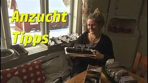 Aussaat Auf Der Fensterbank : anzucht tipps aussaat auf der fensterbank chili paprika physalis youtube ~ Whattoseeinmadrid.com Haus und Dekorationen
