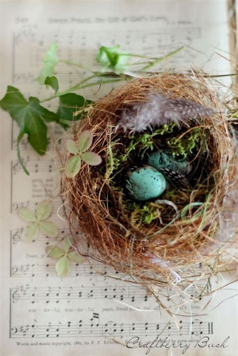 bird decorates nest decorating with bird nests for spring