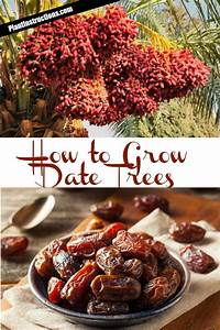 How To Grow Date Trees - A Diy Gardening Guide