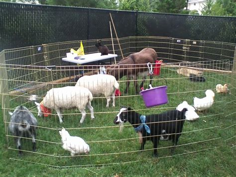 petting zoo ponies happy trails pony jackson party hire jersey