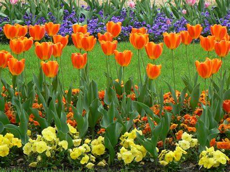 Pic Flowers Photo 721 Of 745 Pics, Wallpaper Photo