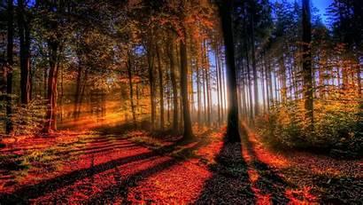Forest Autumn Wallpapers Backgrounds Nature Desktop