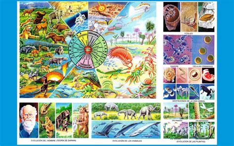 evolucion de la vida evolucion de la vida imagenes wallpapers laminas