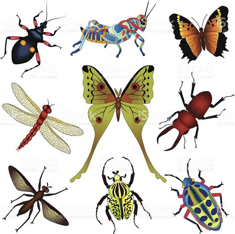 Insect Clipart Insect Clipart Invertebrate Pencil And In Color Insect