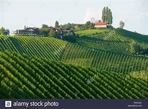 U00d6sterreich  Steiermark  Bezirk Leibnitz  Landschaft An Der Stock Photo  98003491