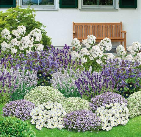 Garten Pflanzen by Bienenfreundliches Staudenbeet 21 Pflanzen Garten