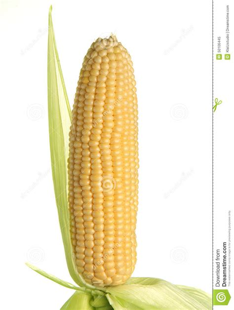 ear  corn isolated stock image image  isolated drink