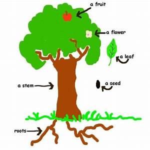Diagram Of A Plant Kids - ClipArt Best