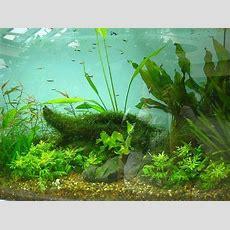 Best 25+ Freshwater Aquarium Ideas On Pinterest