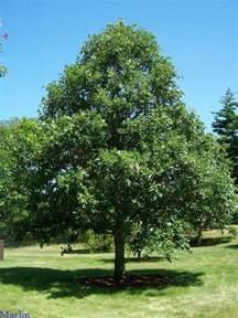 sw white oak hillside