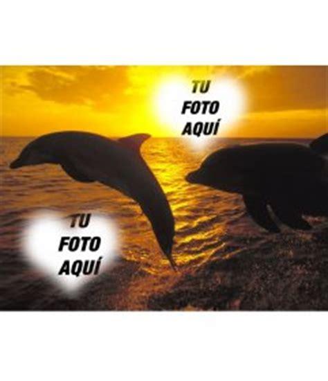 collage  dos fotos en forma de corazon  delfines