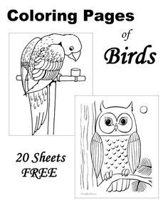 months   year coloring pages education pre school