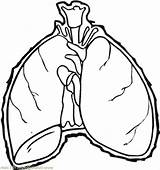 Lungs Drawing Human Coloring Clipartmag sketch template