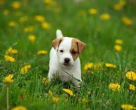 do all short haired dogs shed dog breeds picture