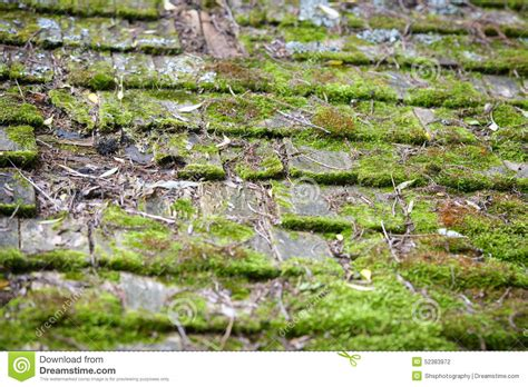 Old Cedar Roof Shingles Covered In Moss Stock Photo Mid State Roofing Flat Roof Coatings Types Useful Life Of Honda Hrv Bars Plexiglass Car Pensacola Contractors Hail Damage Repair Hotel With Pool On