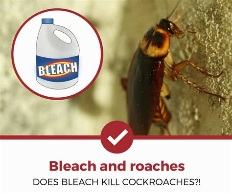 Does Bleach Kill Cockroaches? (surprising Answer Inside