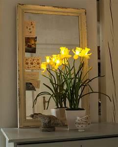 Hse24 Led Kerzen : paradessa kunstnarzissen mit led leuchten hse24 wohnen dekoration home sweet home ~ Pilothousefishingboats.com Haus und Dekorationen