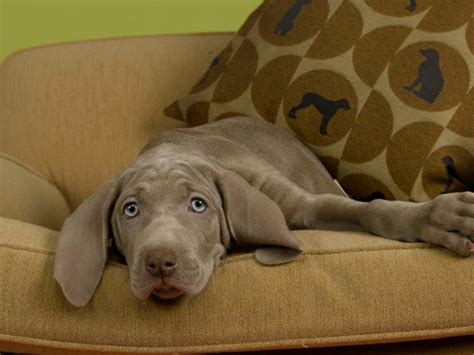 dog friendly sofa fabric 9 tips for a chic pet friendly home hgtv