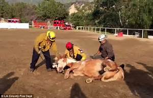 Horse is rescued by fire crews after falling down a ...