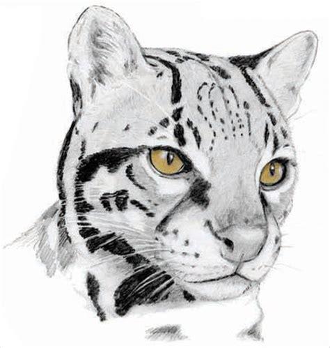 pencil drawings art ideas design trends premium