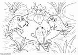 Frog Coloring Cycle Frogs Young Kb sketch template