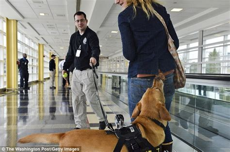 bomb sniffing dogs fail dozens  tests