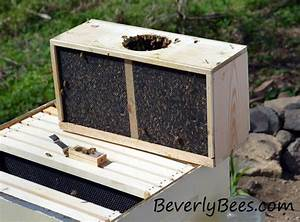 Install Package Bees In Langstroth Hive User's Guide And Manuals