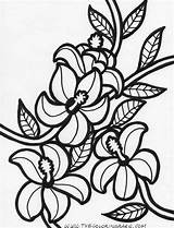 Flower Flowers Coloring Hawaiian Pages Printable Hawaii Tropical Hibiscus Rainforest Cliparts Cartoon Drawing Clip Clipartpanda Colouring Getcoloringpages Getcolorings Clipart Templates sketch template
