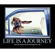 Life Is A Journey – Car Humor