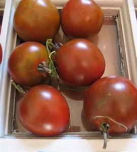 Black Russian Heirloom Tomato - urbantomato